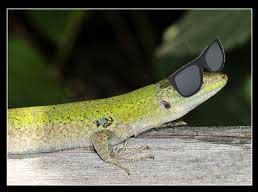 occhiali per lucertole
